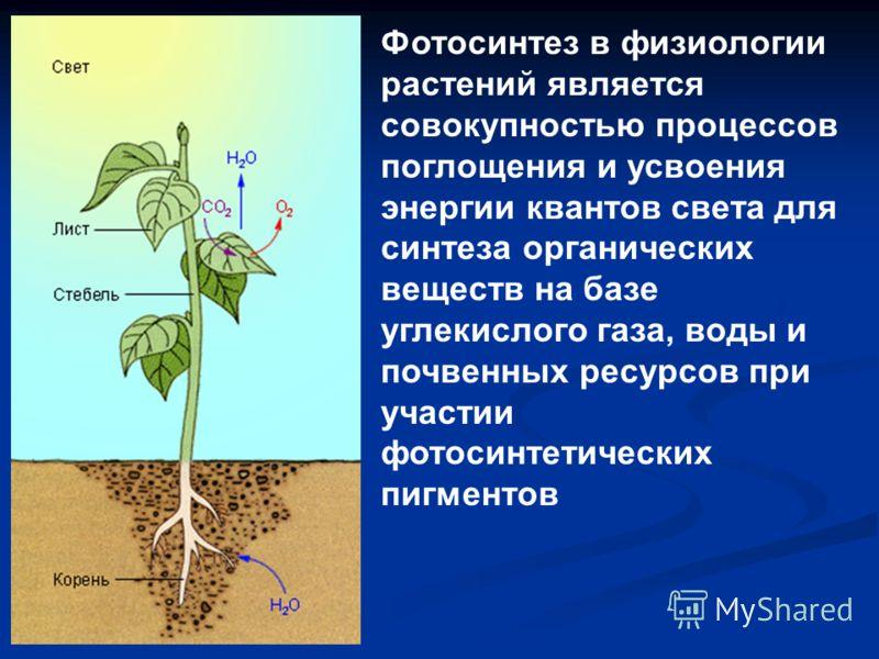 Фотосинтез в физиологии растений является совокупностью процессов поглощения и усвоения энергии квантов света для синтеза органических веществ на базе углекислого газа, воды и почвенных ресурсов при участии фотосинтетических пигментов