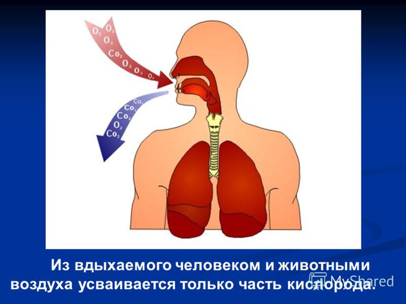 Из вдыхаемого человеком и животными воздуха усваивается только часть кислорода.