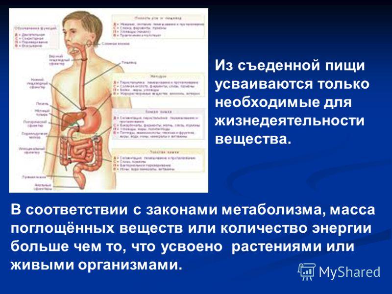 В соответствии с законами метаболизма, масса поглощённых веществ или количество энергии больше чем то, что усвоено растениями или живыми организмами. Из съеденной пищи усваиваются только необходимые для жизнедеятельности вещества.