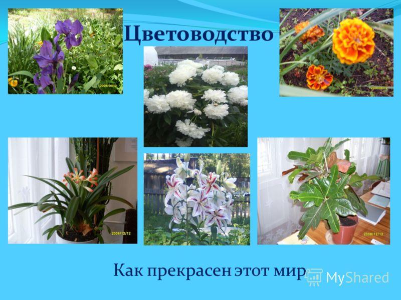 Цветоводство Как прекрасен этот мир
