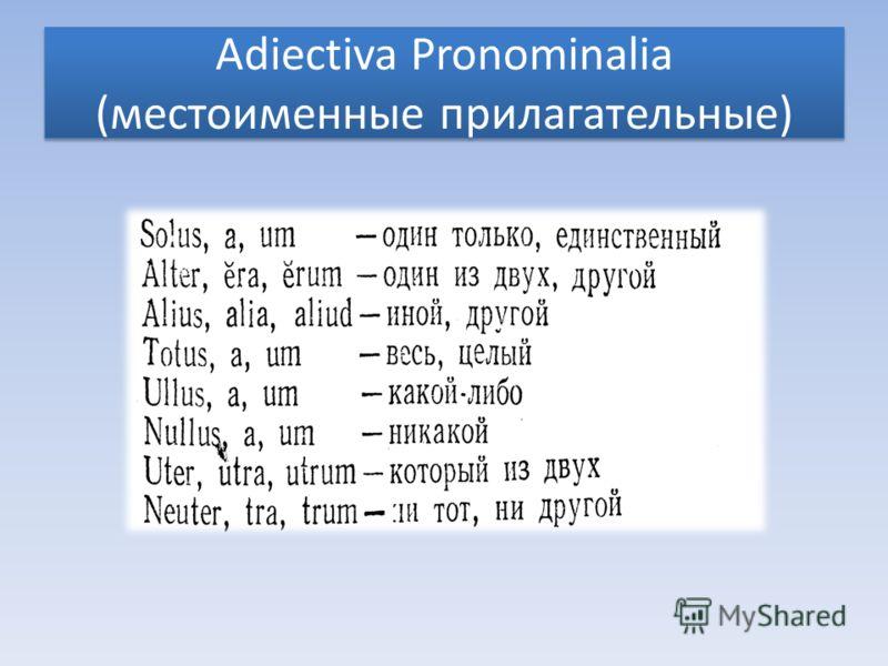 Adiectiva Pronominalia (местоименные прилагательные)