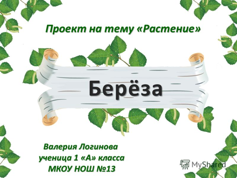 Берёза Проект на тему «Растение» Валерия Логинова ученица 1 «А» класса МКОУ НОШ 13