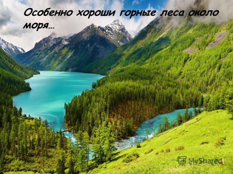Особенно хороши горные леса около моря…