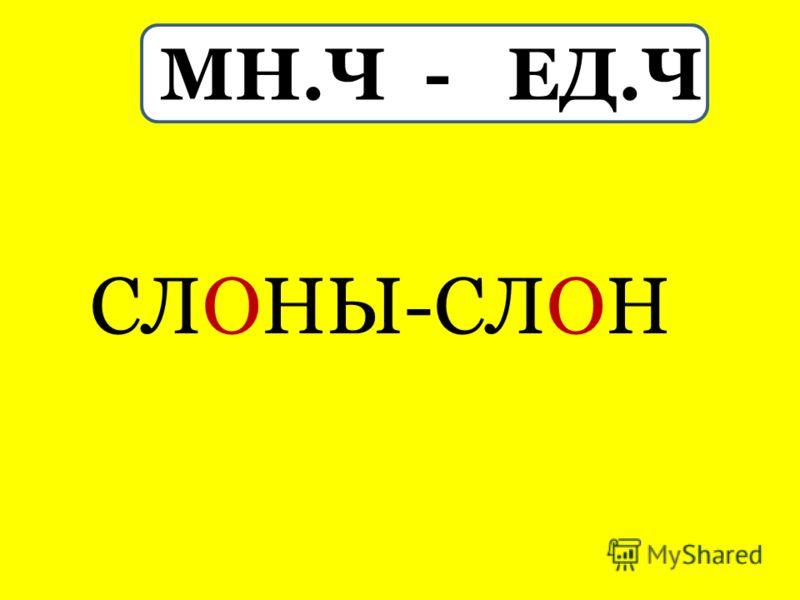 МН.Ч - ЕД.Ч СЛОНЫ-СЛОН