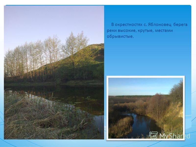 В окрестностях с. Яблоновец берега реки высокие, крутые, местами обрывистые.