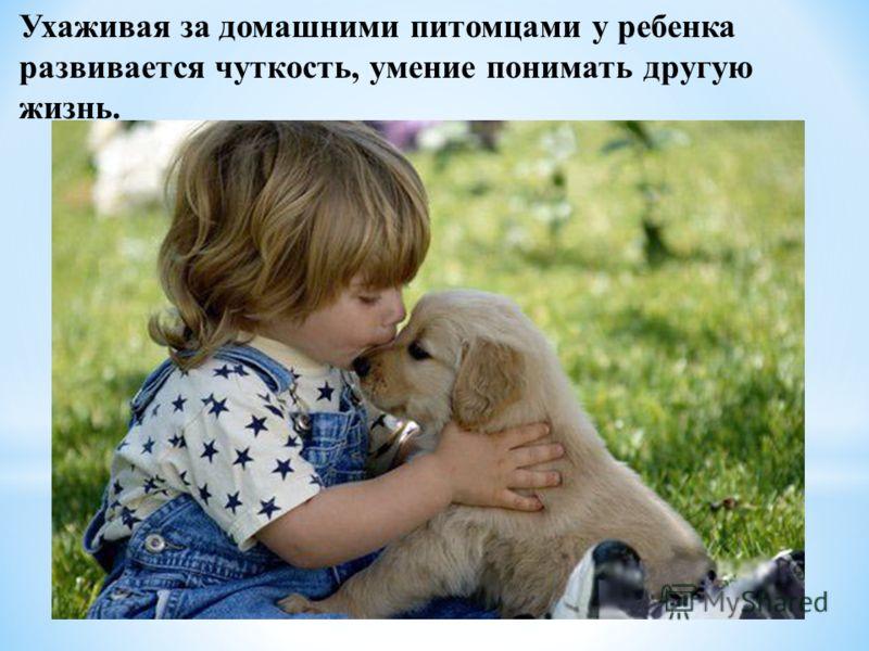 Ухаживая за домашними питомцами у ребенка развивается чуткость, умение понимать другую жизнь.