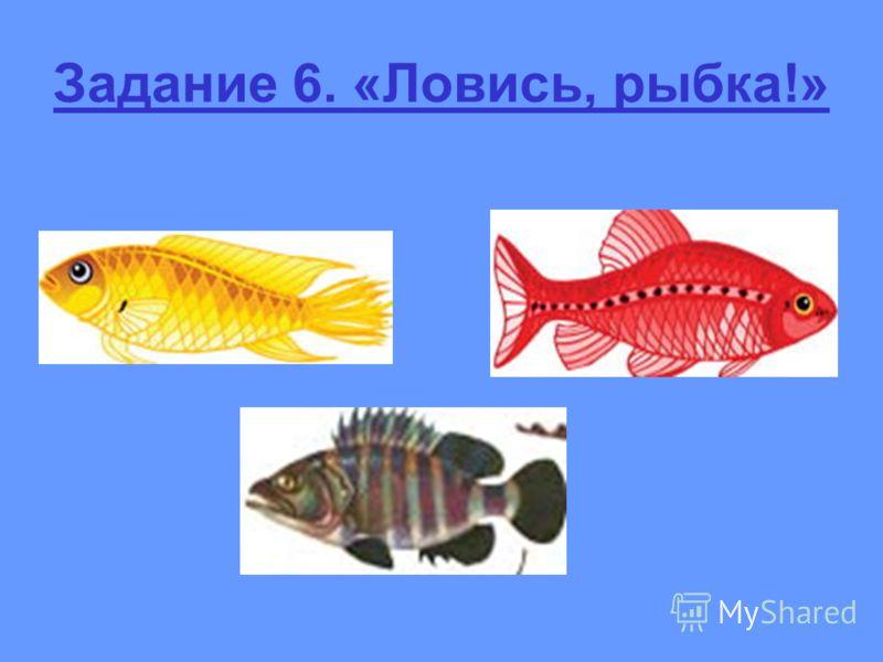 Задание 6. «Ловись, рыбка!»