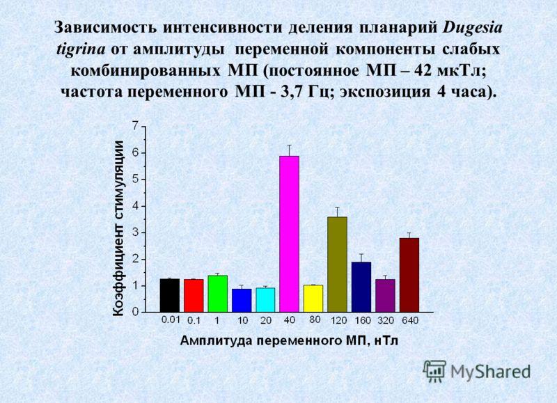 Зависимость интенсивности деления планарий Dugesia tigrina от амплитуды переменной компоненты слабых комбинированных МП (постоянное МП – 42 мкТл; частота переменного МП - 3,7 Гц; экспозиция 4 часа).