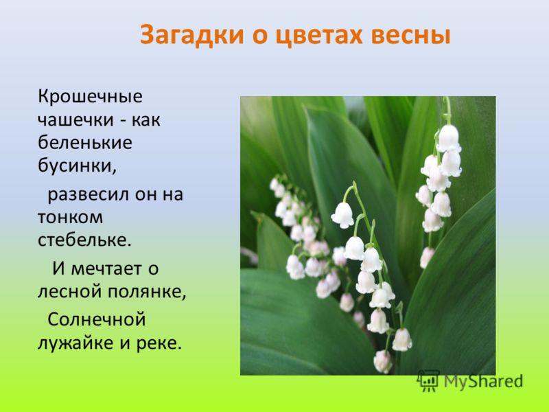 Загадки о цветах весны Крошечные чашечки - как беленькие бусинки, развесил он на тонком стебельке. И мечтает о лесной полянке, Солнечной лужайке и реке.