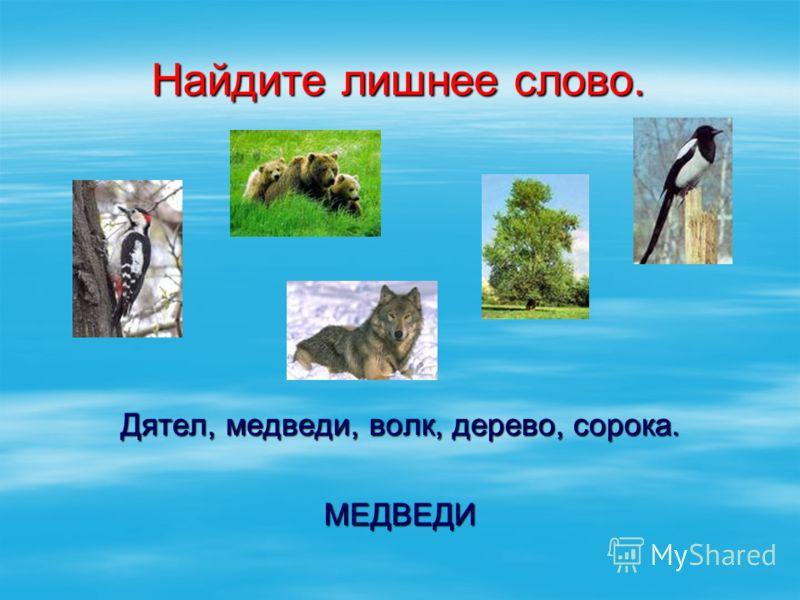 Найдите лишнее слово. Дятел, медведи, волк, дерево, сорока. МЕДВЕДИ