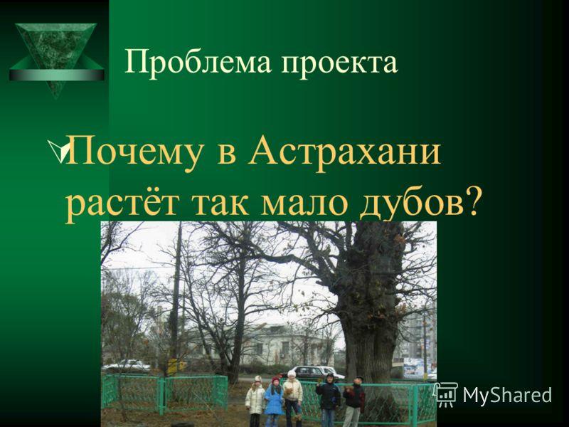 Проблема проекта Почему в Астрахани растёт так мало дубов?