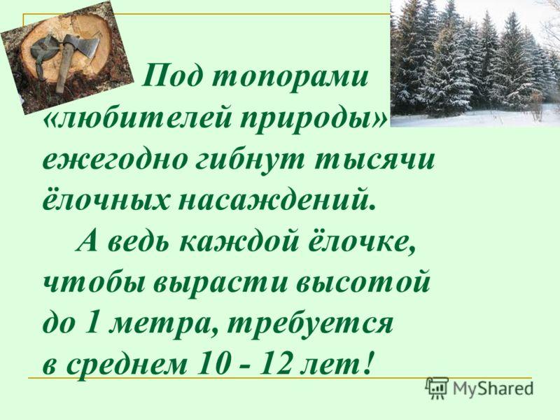 Под топорами «любителей природы» ежегодно гибнут тысячи ёлочных насаждений. А ведь каждой ёлочке, чтобы вырасти высотой до 1 метра, требуется в среднем 10 - 12 лет!