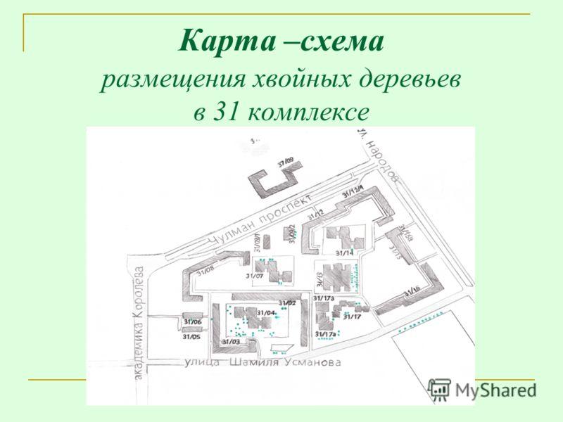 Карта –схема размещения хвойных деревьев в 31 комплексе