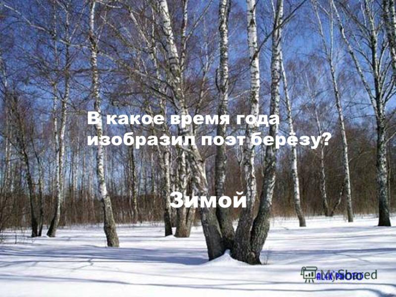 В какое время года изобразил поэт берёзу? Зимой