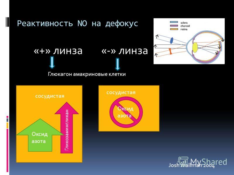Реактивность NO на дефокус «+» линза«-» линза сосудистая Гликозамингликан Оксид азота сосудистая Глюкагон амакриновые клетки Josh Wallman 2004