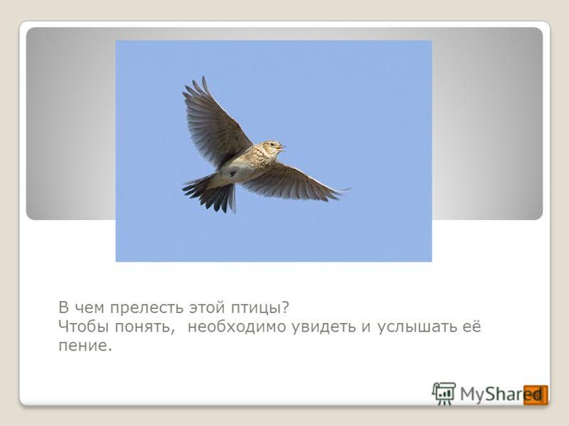 В чем прелесть этой птицы? Чтобы понять, необходимо увидеть и услышать её пение.