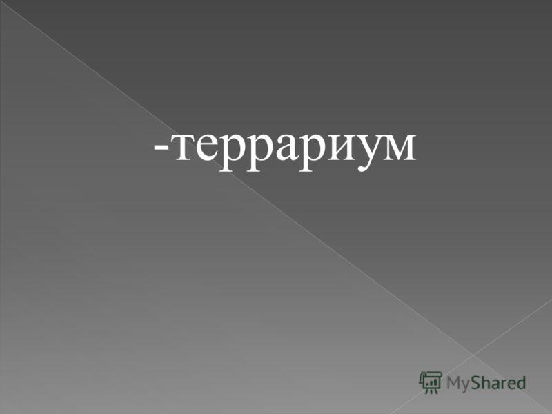 -террариум