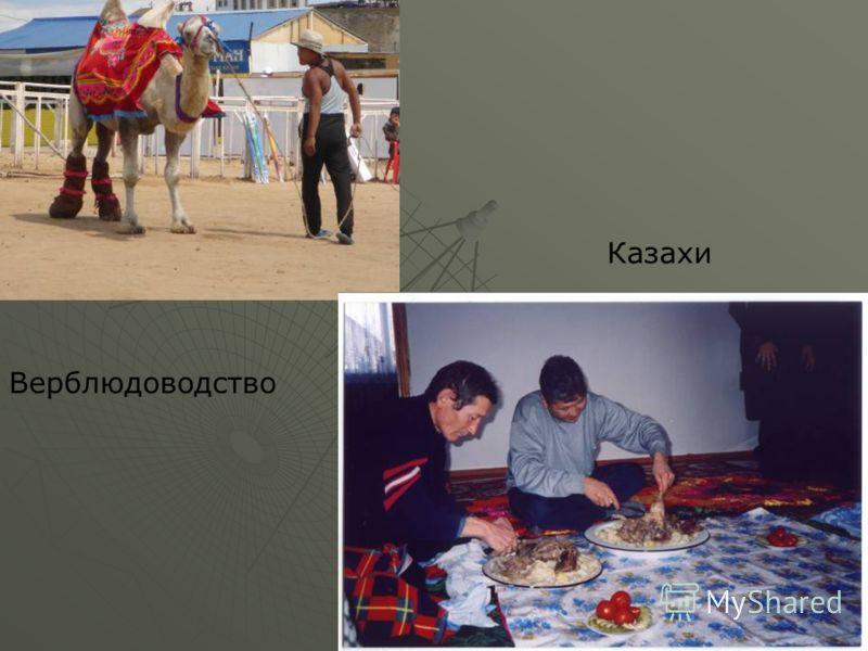 Верблюдоводство Казахи