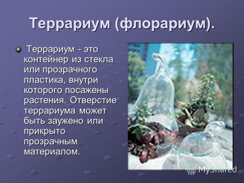 Террариум (флорариум). Террариум - это контейнер из стекла или прозрачного пластика, внутри которого посажены растения. Отверстие террариума может быть заужено или прикрыто прозрачным материалом. Террариум - это контейнер из стекла или прозрачного пл