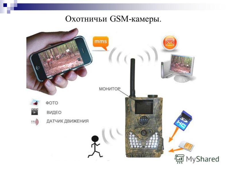 Охотничьи GSM-камеры.