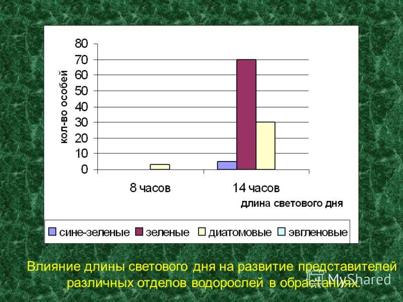 Влияние длины светового дня на развитие представителей различных отделов водорослей в обрастаниях.