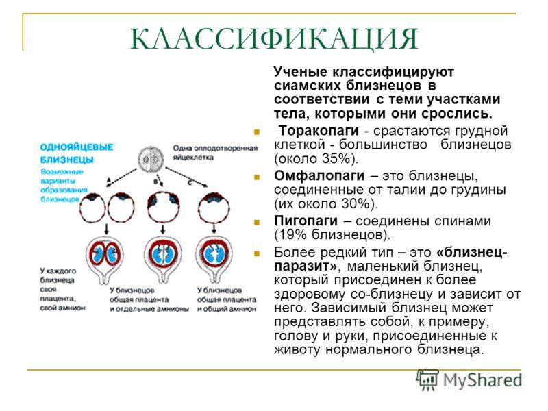 КЛАССИФИКАЦИЯ Ученые классифицируют сиамских близнецов в соответствии с теми участками тела, которыми они срослись. Торакопаги - срастаются грудной клеткой - большинство близнецов (около 35%). Омфалопаги – это близнецы, соединенные от талии до грудин
