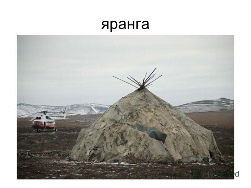 яранга