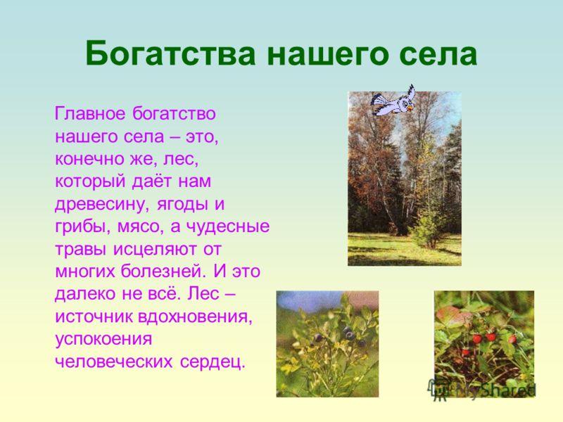 Богатства нашего села Главное богатство нашего села – это, конечно же, лес, который даёт нам древесину, ягоды и грибы, мясо, а чудесные травы исцеляют от многих болезней. И это далеко не всё. Лес – источник вдохновения, успокоения человеческих сердец