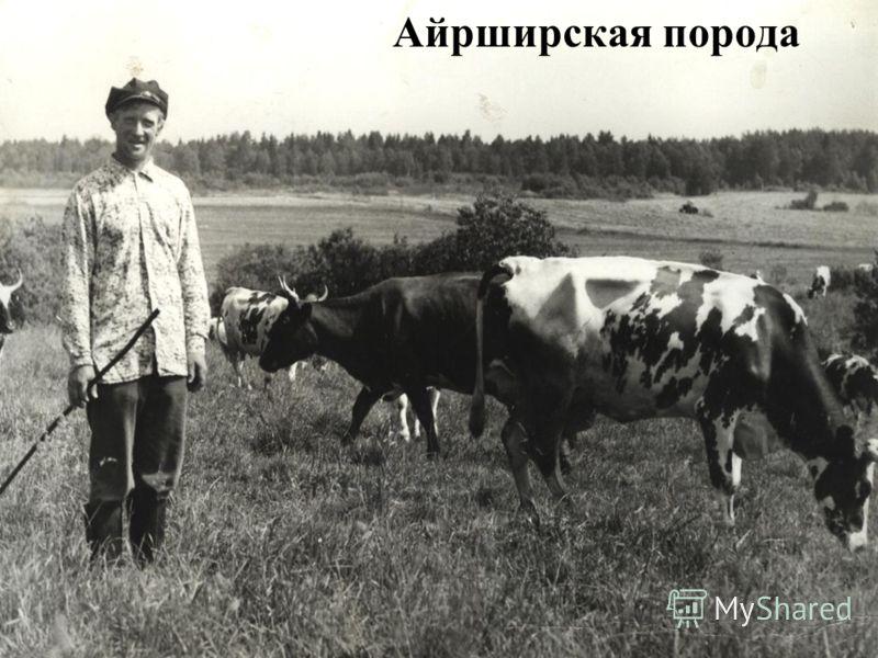 Специализация совхоза Фото: В. Мышелов