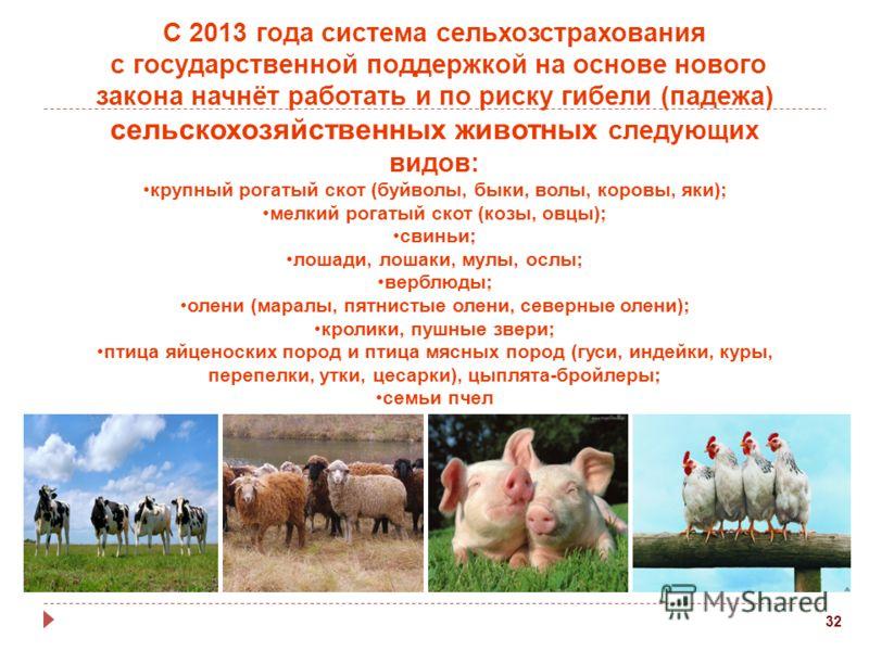 32 С 2013 года система сельхозстрахования с государственной поддержкой на основе нового закона начнёт работать и по риску гибели (падежа) сельскохозяйственных животных следующих видов: крупный рогатый скот (буйволы, быки, волы, коровы, яки); мелкий р