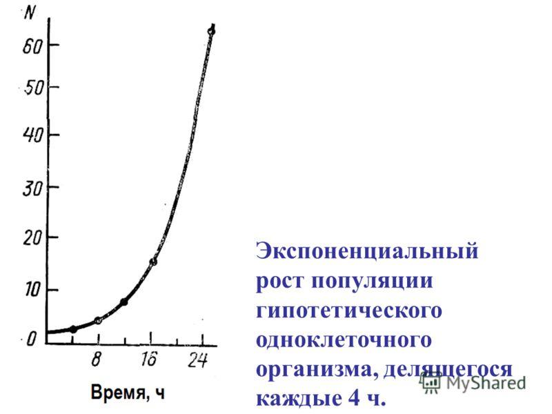 Экспоненциальный рост популяции гипотетического одноклеточного организма, делящегося каждые 4 ч.