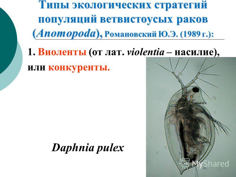 Типы экологических стратегий популяций ветвистоусых раков (Anomopoda), Романовский Ю.Э. (1989 г.): 1. Виоленты (от лат. violentia – насилие), или конкуренты. Daphnia pulex