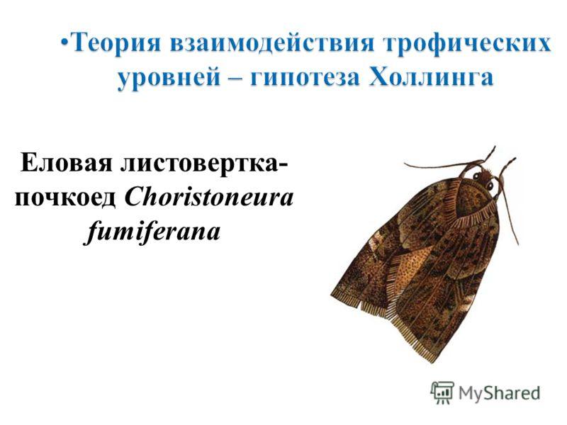 Еловая листовертка- почкоед Choristoneura fumiferana