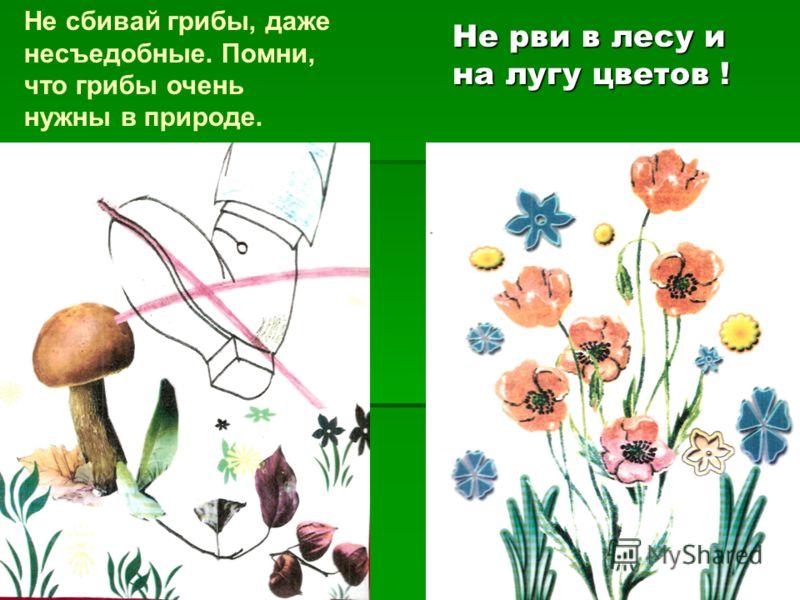 Не рви в лесу и на лугу цветов ! Не сбивай грибы, даже несъедобные. Помни, что грибы очень нужны в природе.