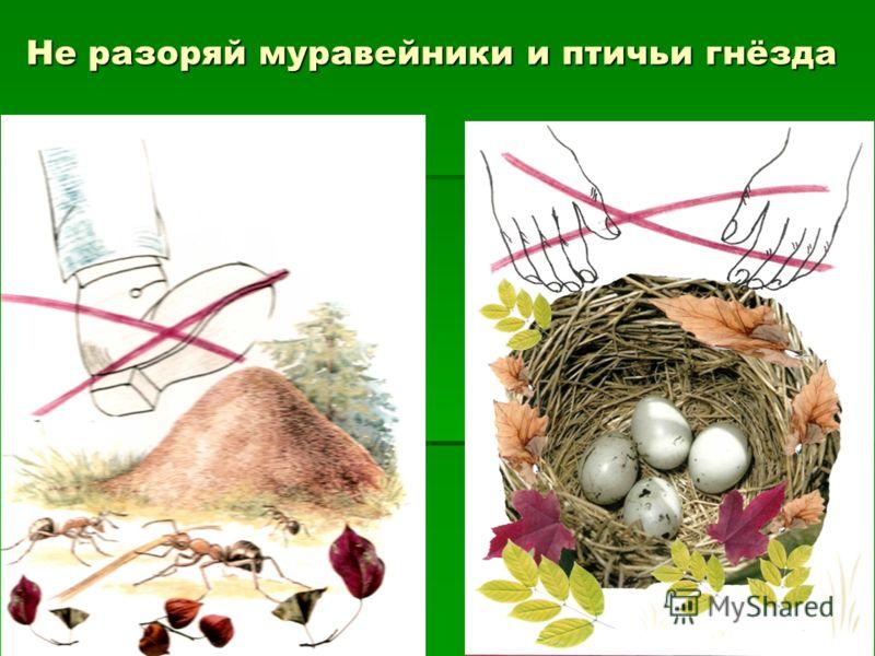 Не разоряй муравейники и птичьи гнёзда
