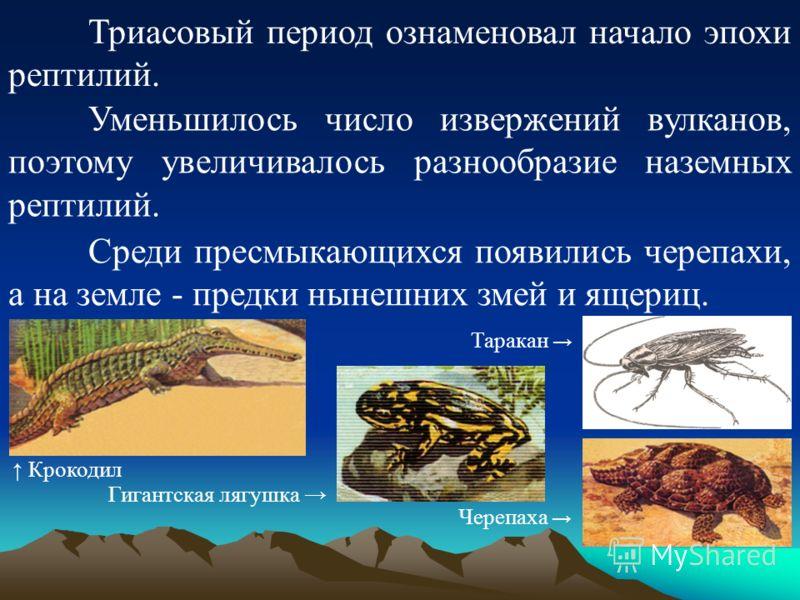 Триасовый период ознаменовал начало эпохи рептилий. Уменьшилось число извержений вулканов, поэтому увеличивалось разнообразие наземных рептилий. Среди пресмыкающихся появились черепахи, а на земле - предки нынешних змей и ящериц. Крокодил Гигантская