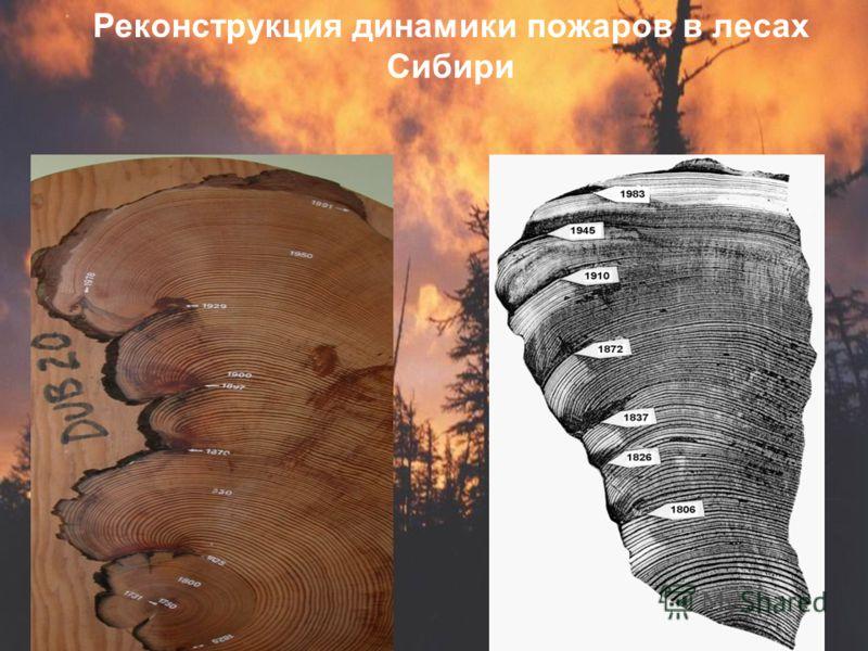 Реконструкция динамики пожаров в лесах Сибири