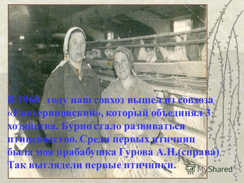 В 1960 году наш совхоз вышел из совхоза «Екатериновский», который объединял 3 хозяйства. Бурно стало развиваться птицеводство. Среди первых птичниц была моя прабабушка Гурова А.Н.(справа) Так выглядели первые птичники.