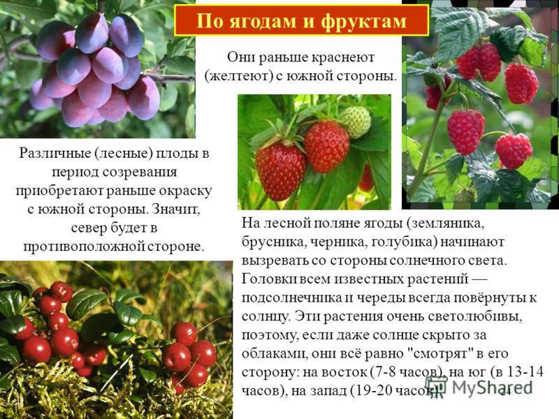 Различные (лесные) плоды в период созревания приобретают раньше окраску с южной стороны. Значит, север будет в противоположной стороне. Они раньше краснеют (желтеют) с южной стороны. На лесной поляне ягоды (земляника, брусника, черника, голубика) нач