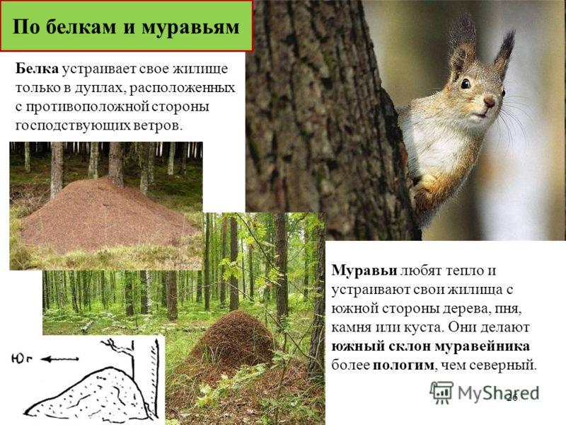 Муравьи любят тепло и устраивают свои жилища с южной стороны дерева, пня, камня или куста. Они делают южный склон муравейника более пологим, чем северный. Белка устраивает свое жилище только в дуплах, расположенных с противоположной стороны господств
