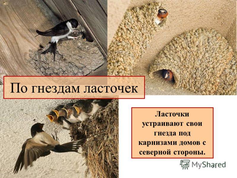 Ласточки устраивают свои гнезда под карнизами домов с северной стороны. 31 По гнездам ласточек