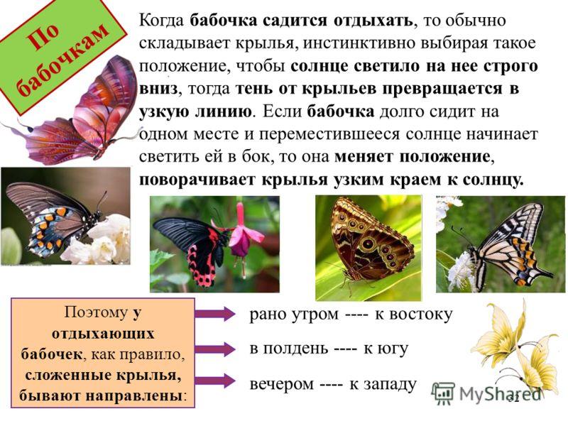 Поэтому у отдыхающих бабочек, как правило, сложенные крылья, бывают направлены: рано утром ---- к востоку в полдень ---- к югу вечером ---- к западу Когда бабочка садится отдыхать, то обычно складывает крылья, инстинктивно выбирая такое положение, чт
