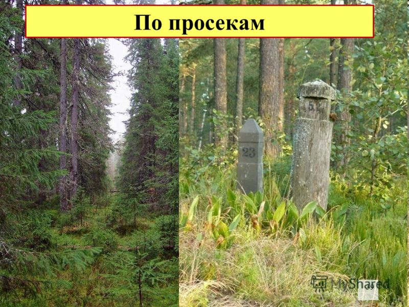 В больших массивах культурного леса определить стороны горизонта можно по просекам, которые, как правило, прорубаются строго по линиям север-юг и восток-запад, а также по надписям номеров кварталов на столбах, установленных на пересечениях просек. На
