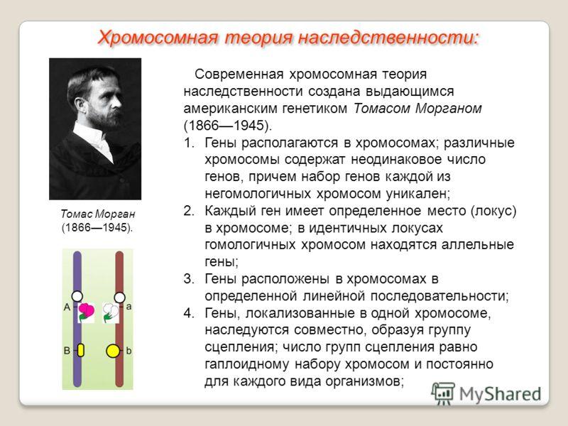 Хромосомная теория моргана доклад 9848