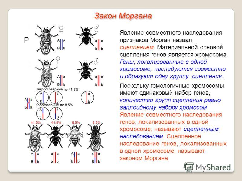 Явление совместного наследования признаков Морган назвал сцеплением. Материальной основой сцепления генов является хромосома. Гены, локализованные в одной хромосоме, наследуются совместно и образуют одну группу сцепления. Поскольку гомологичные хромо