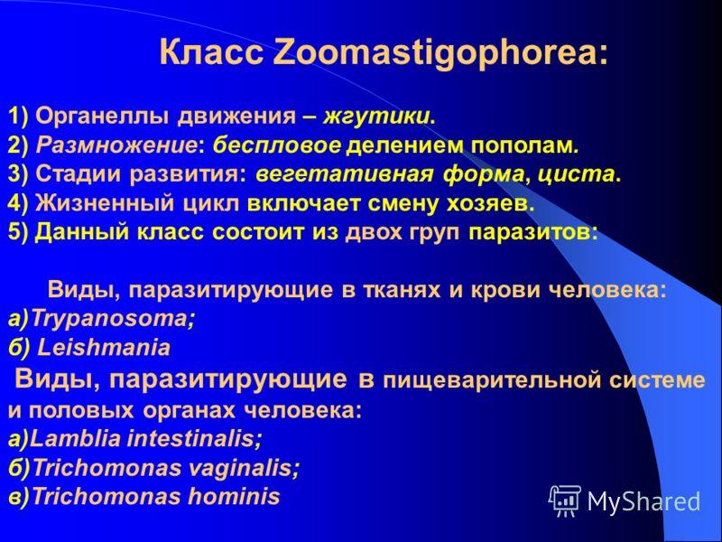 Класс Zoomastigophorea: 1) Органеллы движения – жгутики. 2) Размножение: беспловое делением пополам. 3) Стадии развития: вегетативная форма, циста. 4) Жизненный цикл включает смену хозяев. 5) Данный класс состоит из двох груп паразитов: Виды, паразит