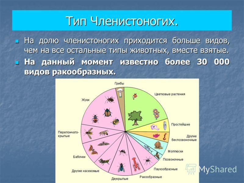 Презентация по биологии 7 кл общая характеристика членистоногих.класс ракообразные