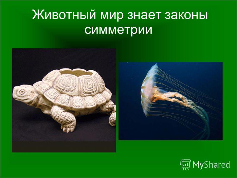 Животный мир знает законы симметрии