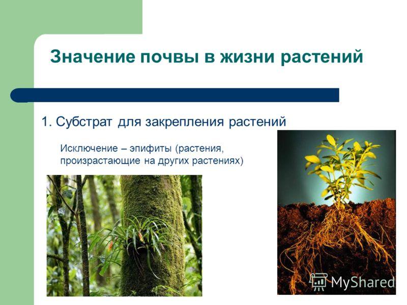 Значение почвы в жизни растений 1. Субстрат для закрепления растений Исключение – эпифиты (растения, произрастающие на других растениях)
