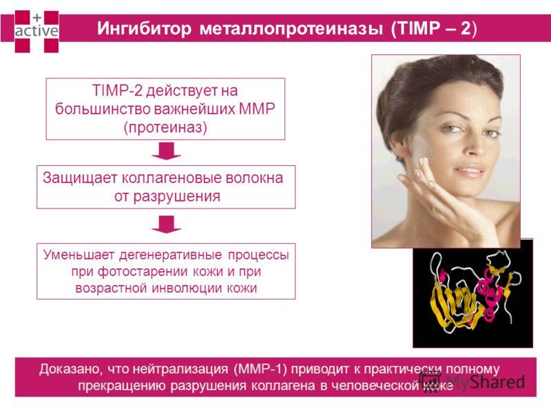 Уменьшает дегенеративные процессы при фотостарении кожи и при возрастной инволюции кожи Ингибитор металлопротеиназы (TIMP – 2) TIMP-2 действует на большинство важнейших MMP (протеиназ) Защищает коллагеновые волокна от разрушения Доказано, что нейтрал